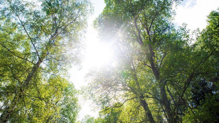 skog_i_ljus_1920x1080